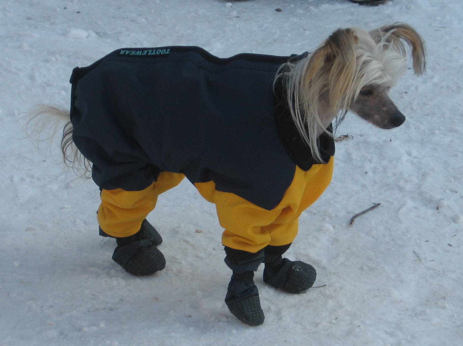Fleece Snow Suits for Dogs http://tootlewear.webs.com/smallbreeddogs.htm